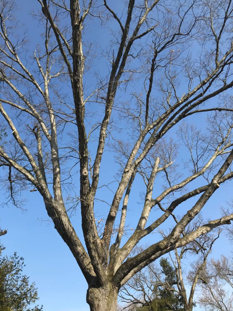 free tree removal for seniors